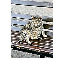 Irish Fat Cat, County Cork, Ireland Photographic Print