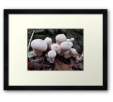 Toadstools in the Woods Framed Print