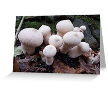 Toadstools in the Woods Greeting Card