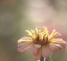 Fading Summer by Olivia Moore