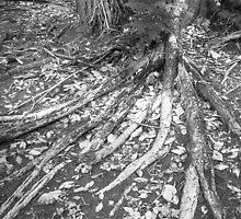 Roots by vanyahaheights