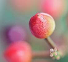 Berries in my garden... by Bob Daalder
