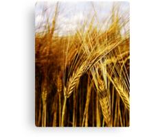 24 Carat Corn Canvas Print