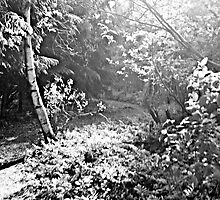 Black forest II by jjustinico