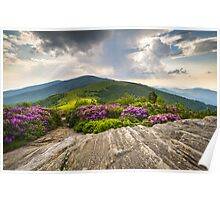 Jane Bald in Bloom - Roan Mountain Highlands Landscape Poster