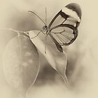 Glasswing by fraser68