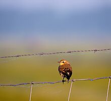 A little bird by THHoang