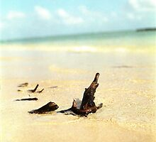 driftwood by sarah noce