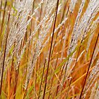 Tall Grass by Karen Jayne Yousse