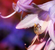 Hosta Flower by Maisie Sinclair