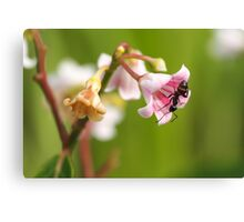 Dogbane Visitor Canvas Print