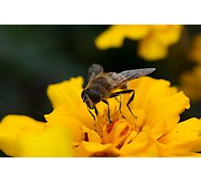 Bee Launch Photographic Print