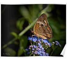Buckeye Butterfly Wings Upright Poster