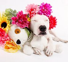 Beebs & Babes Flower Crown by Believeabull