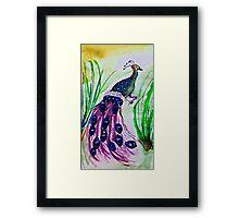 Strutting his stuff, watercolor Framed Print