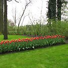 Row of Reds - Keukenhof Gardens by kathrynsgallery