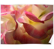 Fluttering petals Poster