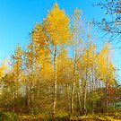 Autumn in Maplewood Flats... by RichImage