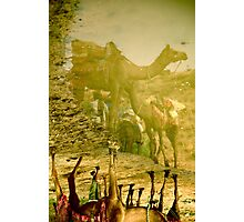 Camel Reflections Photographic Print