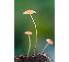 Tiny Fungas, Mission Beach Photographic Print