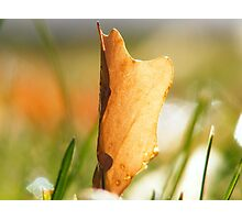 Fall fast approaches... Photographic Print
