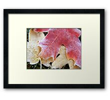 Red Frost... Framed Print