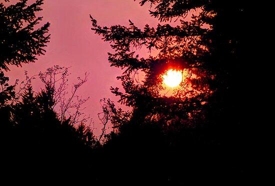 September Sun by Tori Snow