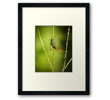 small predators Framed Print