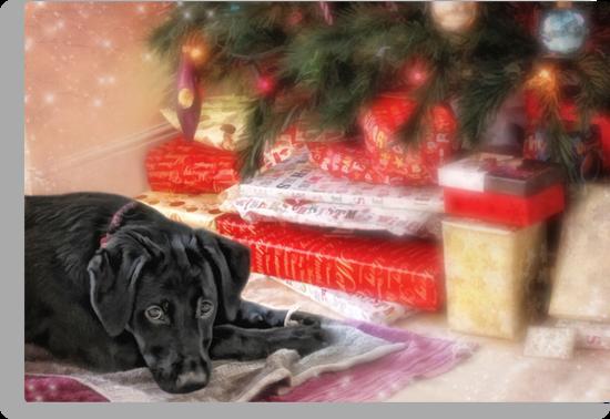 Waiting for Santa...... by Lyn Evans