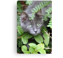 Cat Playing Hide and Seek Canvas Print