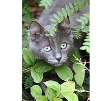 Cat Playing Hide and Seek Photographic Print