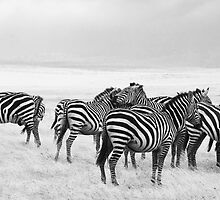 Zebra, Maasai Mara, Kenya by Neville Jones