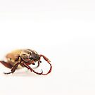 Beetle On White by CollinScott