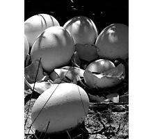 Life Finds a Way (black and white) Photographic Print