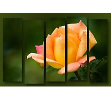 Lesa's Rose Photographic Print