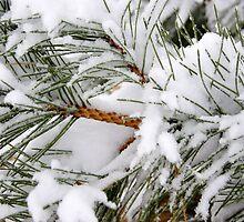 Snowy Pines by Karen Jayne Yousse