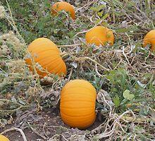 Pumpkin Row by Karen Jayne Yousse