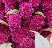 Hot Pink Amaranth by Karen Jayne Yousse
