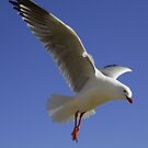 Seagull Flight by RobsVisions