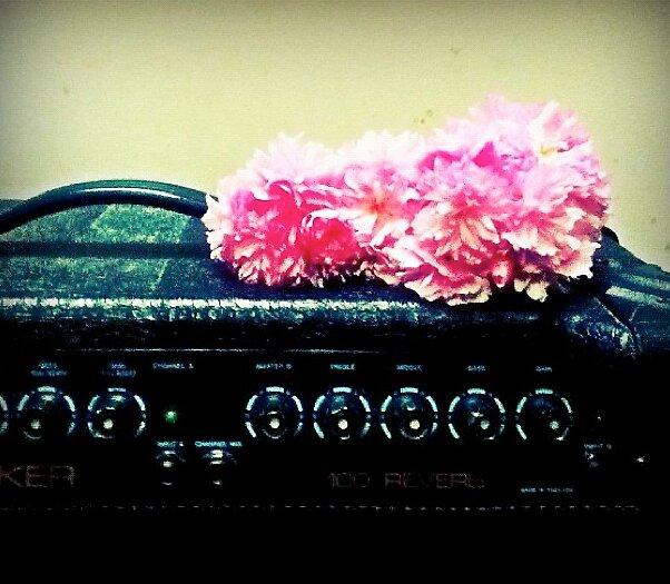 Flowers on amp by googieosbourn