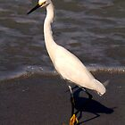 Egret in seafoam by Stephanie Macwhorter