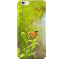 Beautiful Viceroy Butterfly Limenitis archippus near lake iPhone Case/Skin