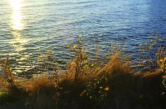 Seaside Flowers by kendlesixx