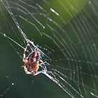 Spider In The Porch by lynn carter