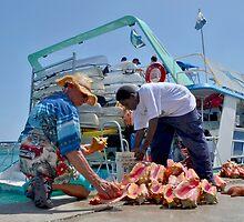 Choosing a Conch Shell... Nassau, The Bahamas by 242Digital
