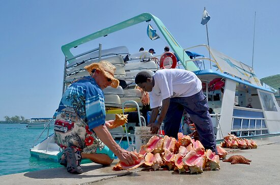 Choosing a Conch Shell... Nassau, The Bahamas by 242Digital