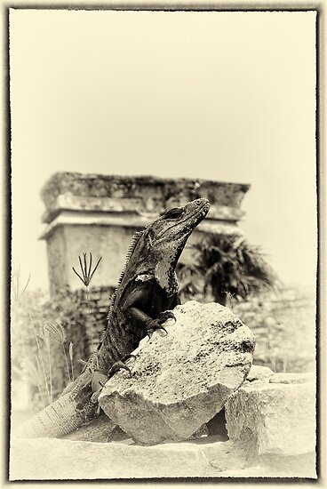 """The Poser of Tulum"" (yellowed) by Andreas Koerner"