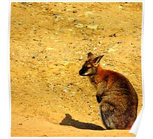 Wallaby One Poster