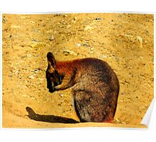 Wallaby Two Poster
