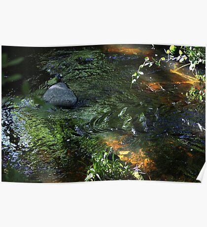 Running water in Scottish Woodland Poster